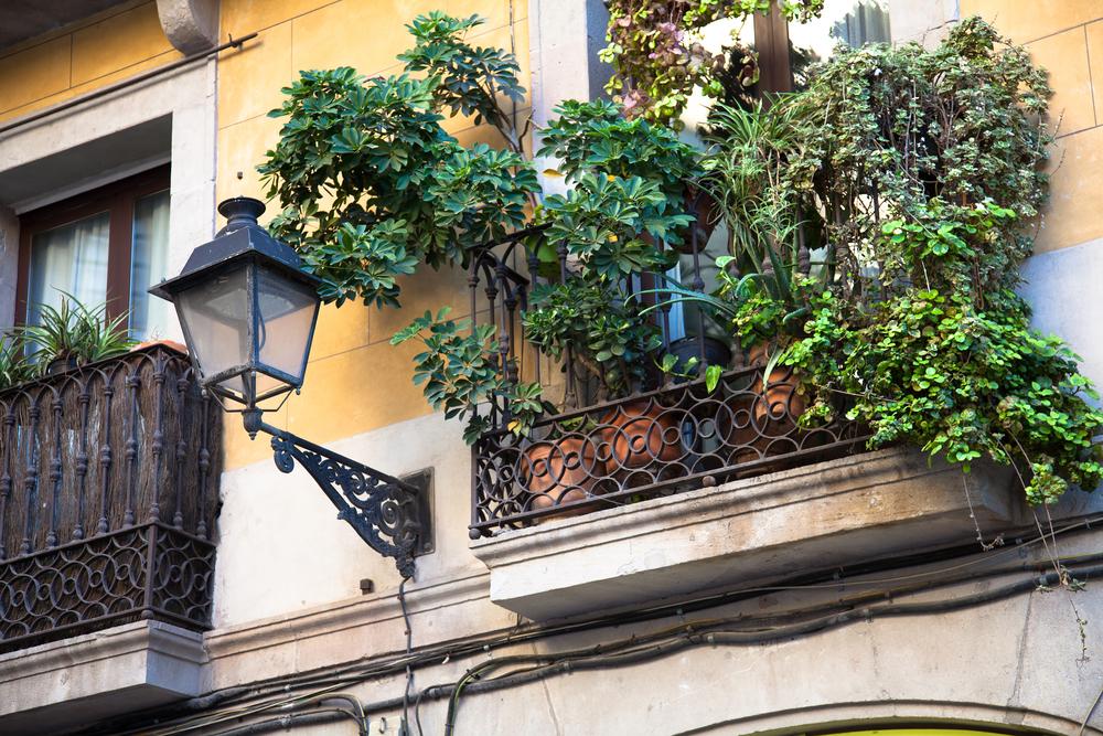 balcony plants _319419977
